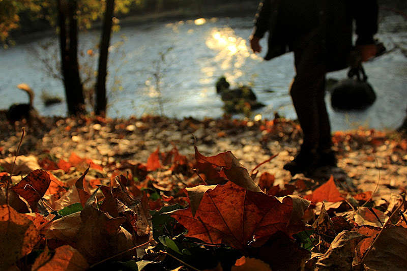 Viaggiare in autunno di yuna57