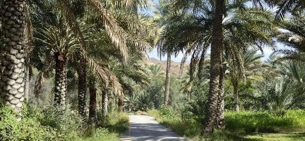 Al Ḩamrā