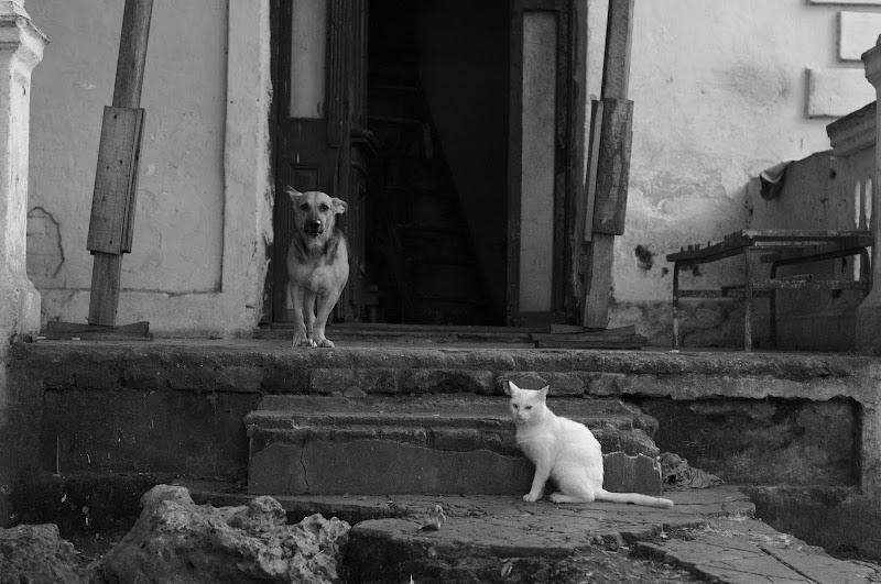 Perro y Gato di SDF