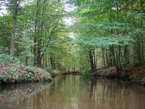 Photo: wpływam w lasy Stobrawskie
