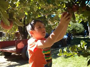 Photo: Clark Picks Apples