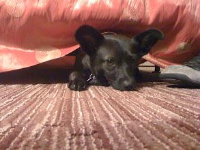 Photo: little dog at the Hotel Kabuki in Japantown, San Francisco, CA