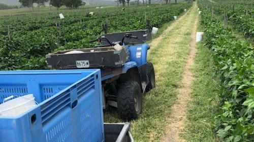 Tenterfield NSW  23ha Organic Cert Vegetable Enterprise and Facilities