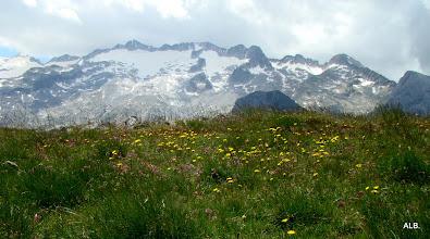 Photo: Los picos y las flores.