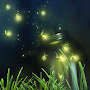 fireflies live wallpaper APK icon