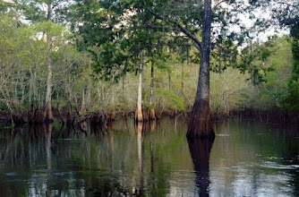 Photo: 2A081060 FL - Withlacoochee River Park