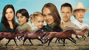 The Divorce Horse thumbnail