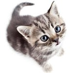 Save The Kitten: Cat Stories Told By A ChatBot Icon