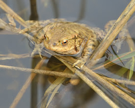 Photo: Toad