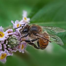 Bee and Flower by Rui Santos - Instagram & Mobile Android ( brazil, bee, mobile, apexel, flower, amazon, amazônia, samsung, abaetetuba, pará, telemovel, flor, abelha,  )