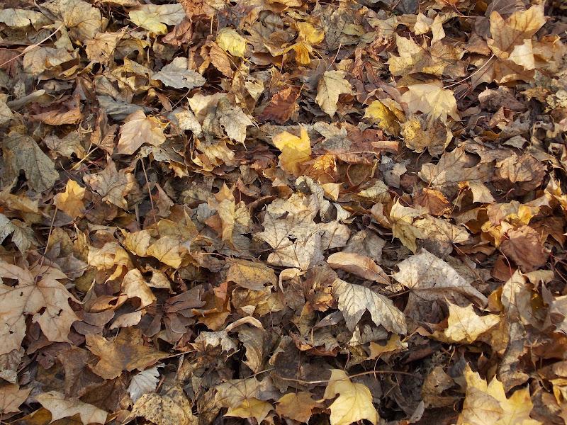 Tappeto di foglie di pandi