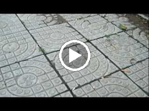 Video: a strange worm on pave in QRRS Dorms' garden, after the most raving thunderstorm in 2011.
