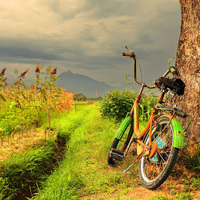 Old Bicycle by Anta Abine Hiro - Transportation Bicycles ( bicycle )