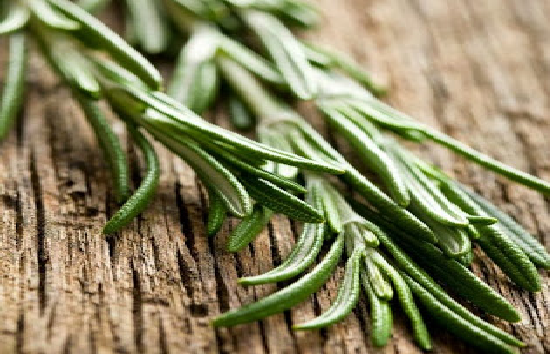 Rosemary Protects Against Macular Degeneration