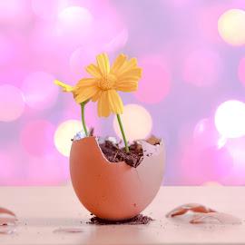 Egg And Flower by Mohamed-Fadel Lakhmi - Novices Only Objects & Still Life ( home, home studio, still life, egg, bokeh, flower )