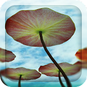 3D Water Lilies Live Wallpaper