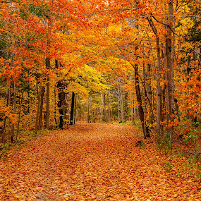 Colourful tunnel by Jack Brittain - Landscapes Forests ( durham county, canada, autumn, fall, trail, trees, ontario, whitby, leaves, colours )
