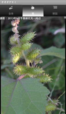 シンプル植物リスト-雑草編2-のおすすめ画像3