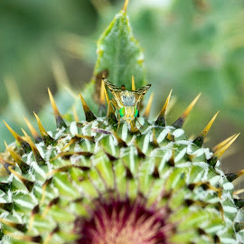 Dangerous Landing by Jade Snell - Animals Insects & Spiders ( green insect, fly, spikes, plant, insect, green fly, green flower )