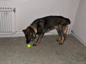 Photo: Bob har kontroll på alle ballene