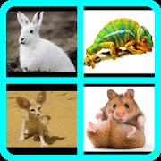 İngilizce Hayvanlar Alfabetik