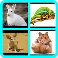 İngilizce Hayvanlar Alfabetik icon