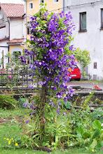 Photo: Nasz kemp, gospodyni dbała bardzo o swoje roślinki