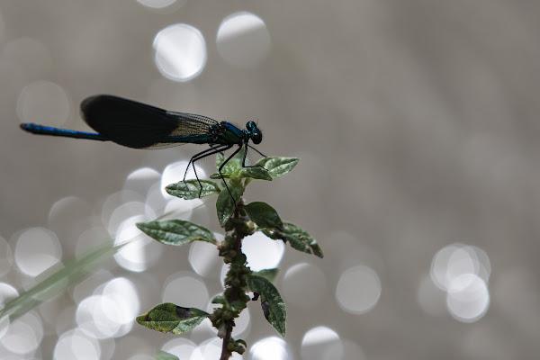 Inseguendo una libellula in un prato.... di ped1_dom