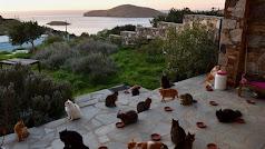 Isla de Grecia con 55 gatos