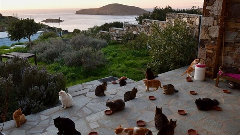 Isla de Grecia con 55 gatos.