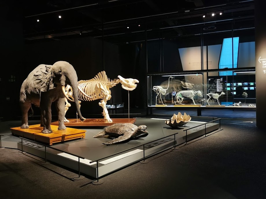 Foto Museu de Ciències Naturals de Barcelona 20