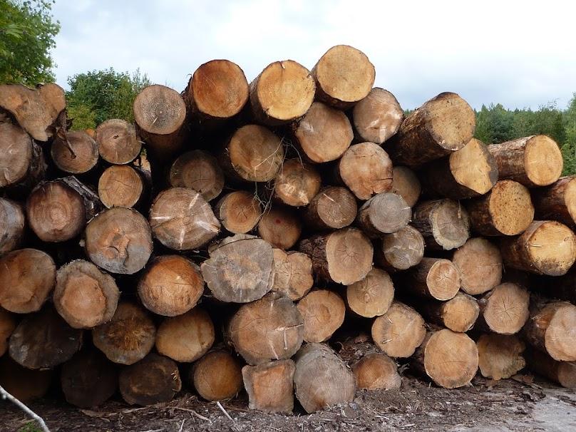 Drewno na opał - jakie najlepsze?