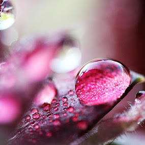 Water drop. by Denis Klicic - Nature Up Close Flowers - 2011-2013 ( water, macro, purple, drop, rain, flower )