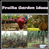 Fruits Garden Ideas
