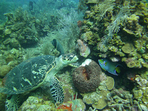 Photo: Turtle