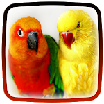 Parrot Live Wallpaper ? Beautiful Birds HD Icon
