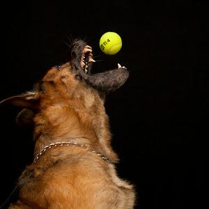 diego ball1.jpg