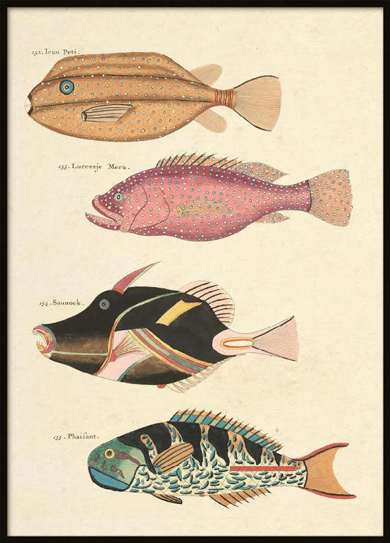 Vintage Fishes 3, Poster