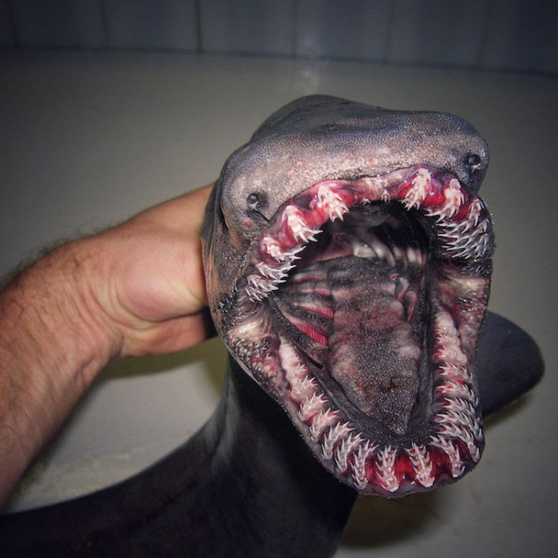 Criaturas abissais que mais parecem de outro mundo