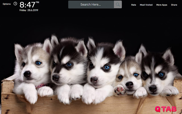 Husky Wallpapers New Tab