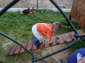 Photo: Děti ukazují slepičkám jak do kurníku