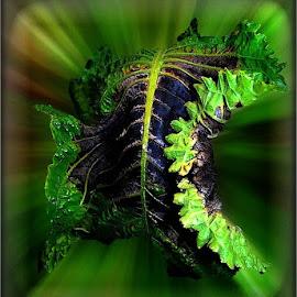 Green leave by Marissa Enslin - Digital Art Things