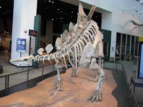 Photo: Science Museum of Minnesota