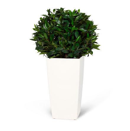 Konstväxt lagerboll 35cm