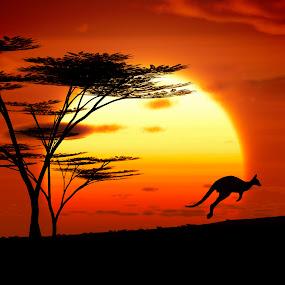 kangoroo sunset australia by Markus Gann - Animals Other Mammals ( freedom, bright, yellow, travel, heat, sky, nature, weather, sunshine, light, element, wild, orange, snout, horizon, tourism, quiet, environment, australia, outdoors, hot, scene, low, natural, panoramic, warm, jumping, wildlife, landscape, sun, adventure, kangaroo, sunny, fur, individuality, animal, sand, extreme, desert, dry, park, beautiful, wilderness, red, sunset, outdoor, background, summer, wallaby, sunrise )