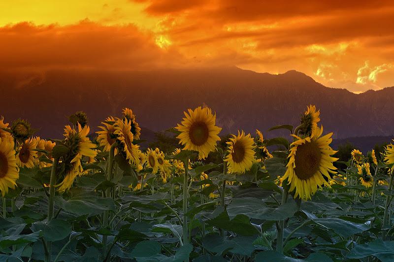 disorientamento al tramonto- alla ricerca del sole perduto di kaos
