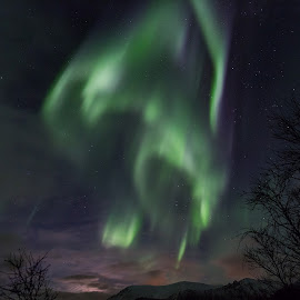 Aurora dances by Benny Høynes - Landscapes Starscapes ( canon, northern lights, aurora borealis, landscapes, norway )