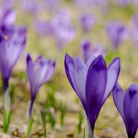 by Gino Libardi - Flowers Flowers in the Wild ( flower photography, flower closeup, flower macro, flowering, flower )