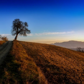Tha tree by Atti Maguran - Landscapes Mountains & Hills