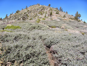 Photo: View north back toward Pine Mt. navigating a brushy section